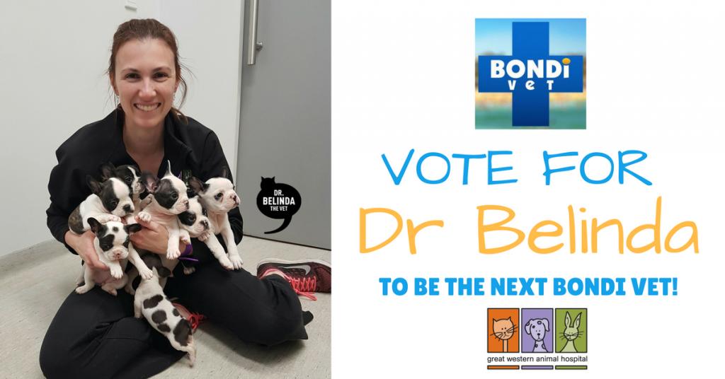 Dr Belinda - New Bondi Vet