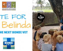 Bondi Vet Question – Why am I a vet?
