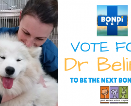 Bondi Vet Question – Why did you study animal acupuncture?