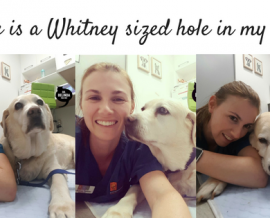 There is a Whitney sized hole in my life…