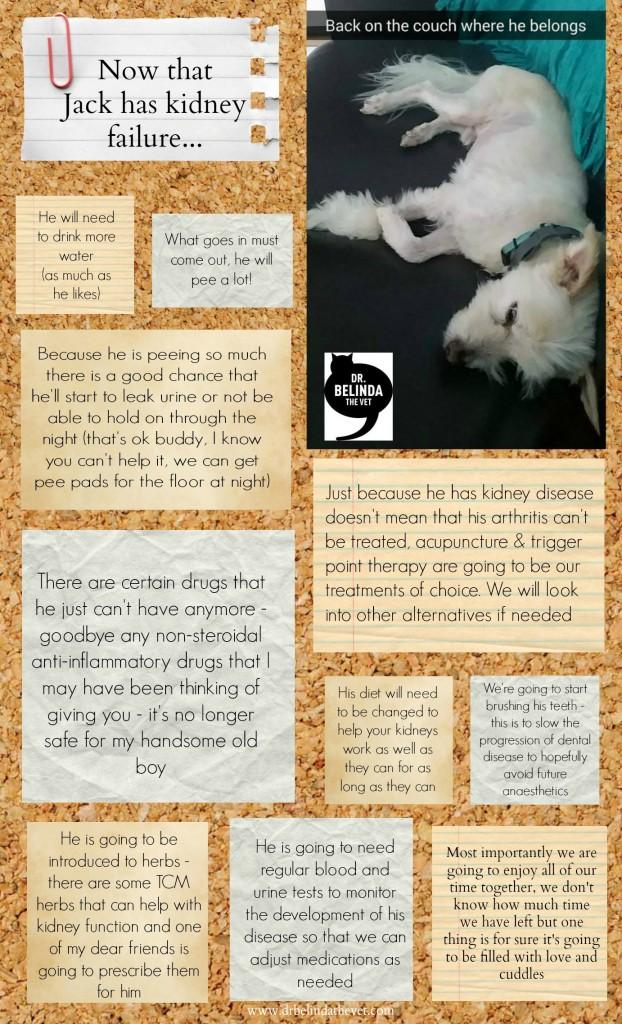 Kidney Failure In Dogs Dr Belinda The Vet